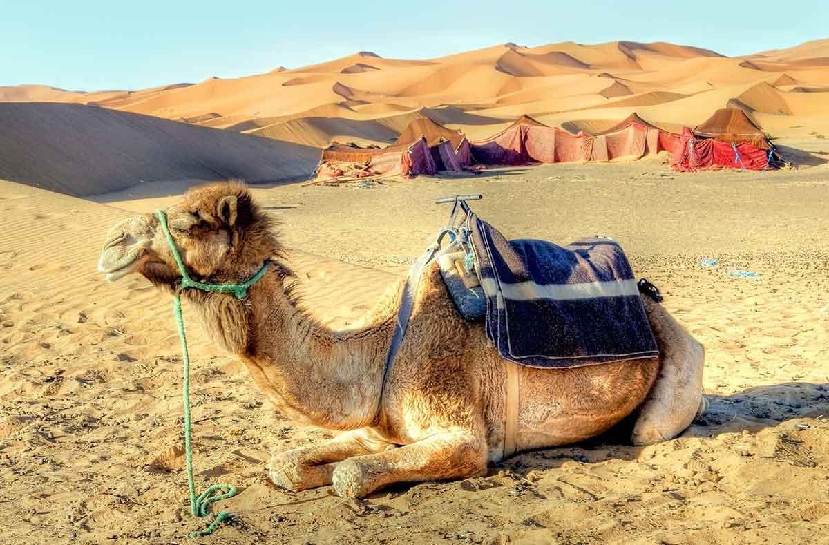 Campamento de haimas en el desierto del Sahara