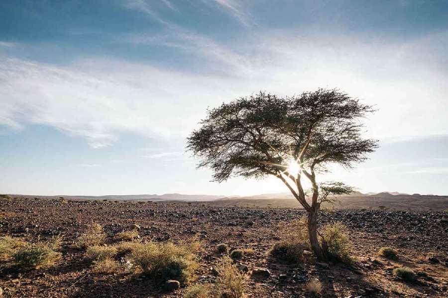 Parque nacional Arganeraie