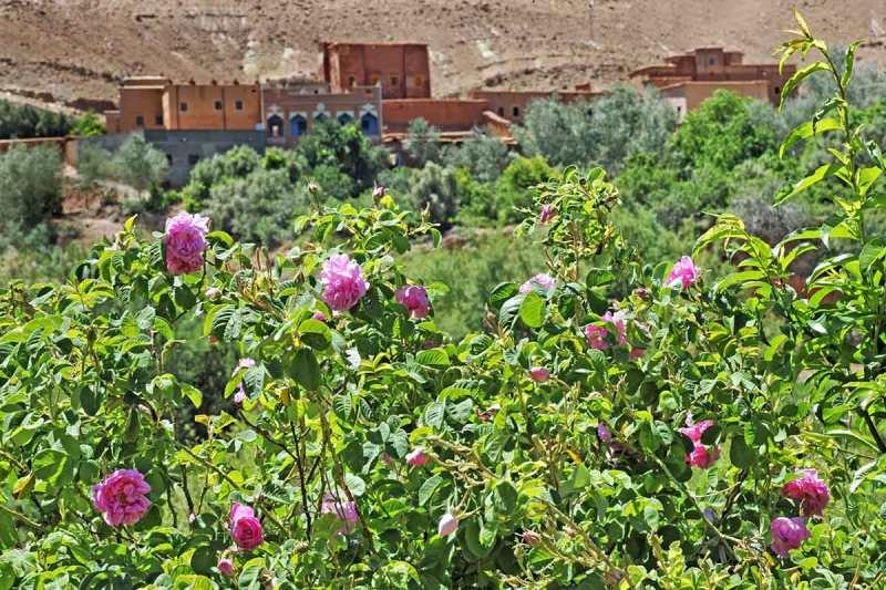 Pueblo Valle de las Rosas