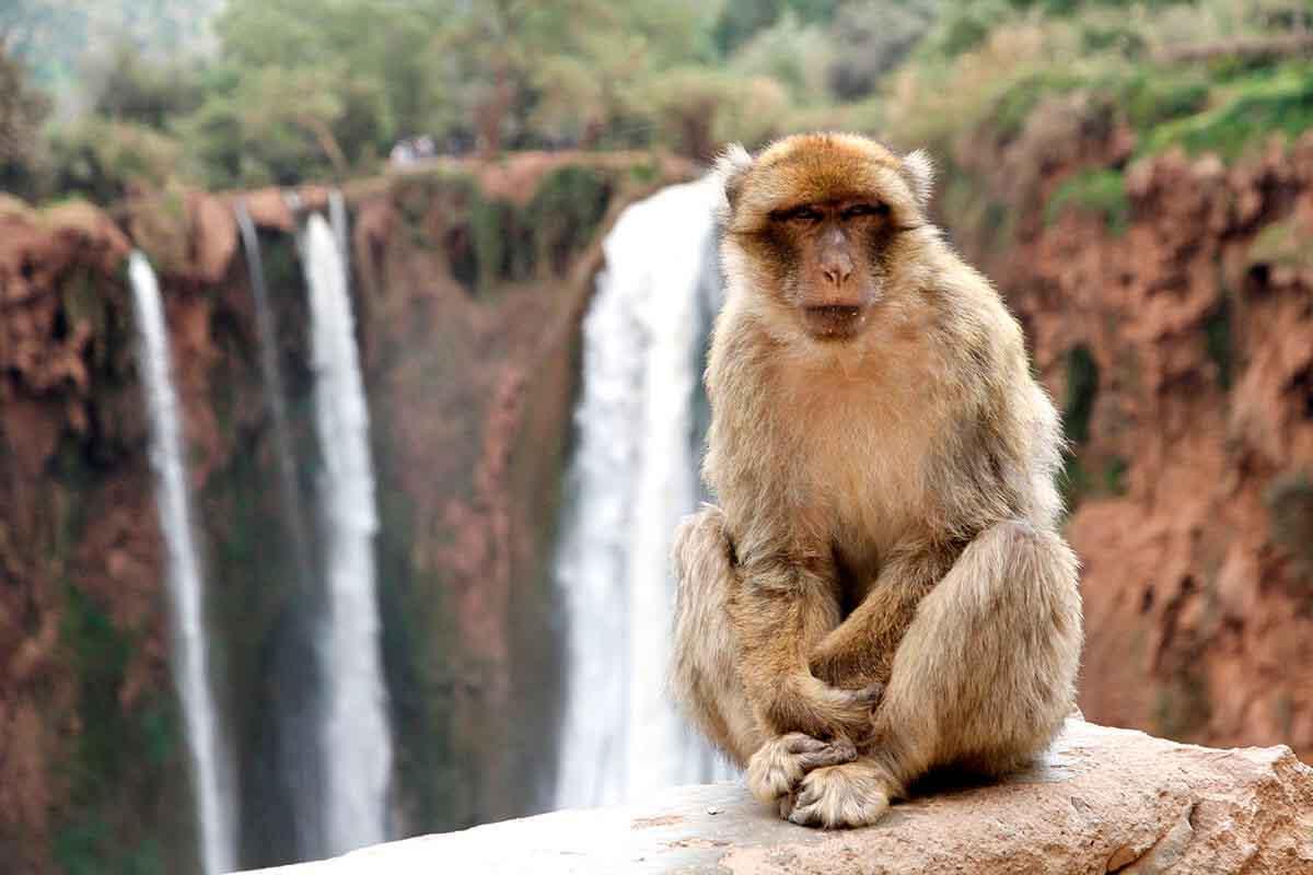 Monos cascadas de Ozoud
