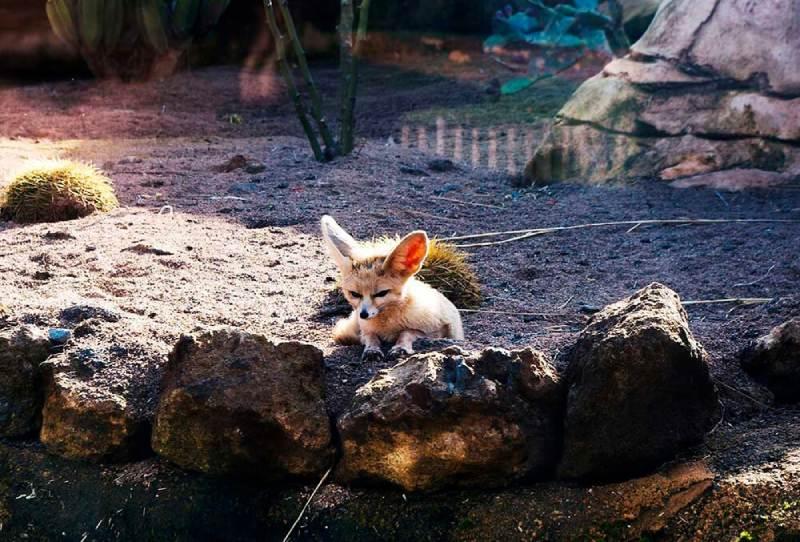 Fauna-de-Marruecos-los-animales-más-representativos-del-país-01