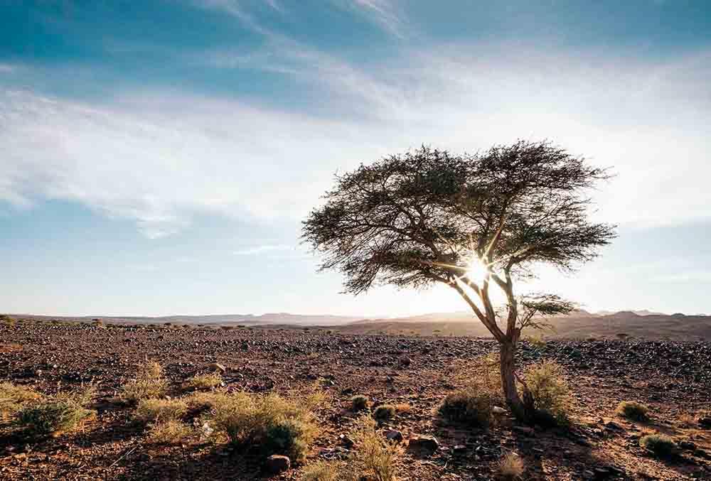 Flora-de-Marruecos-argán,-cedros,-encinas,-enebros-y-mucho-más-01