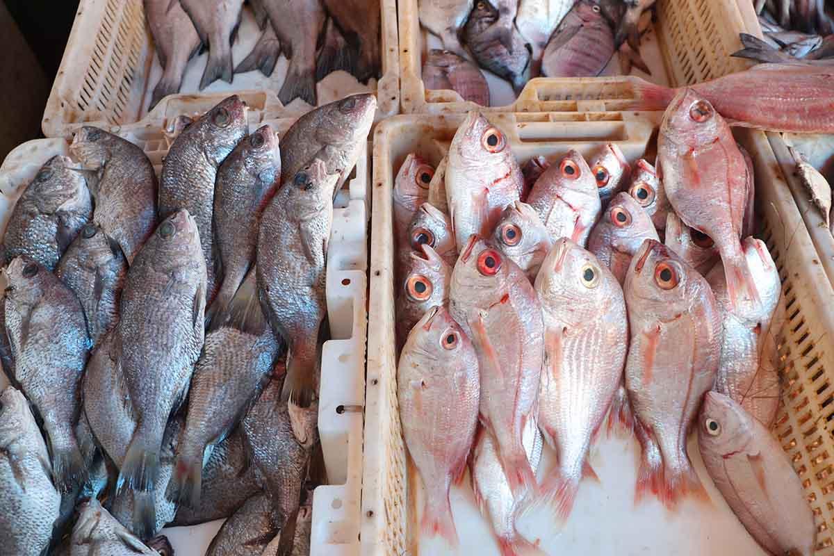 Comer pescado fresco en Moulay Bousselham