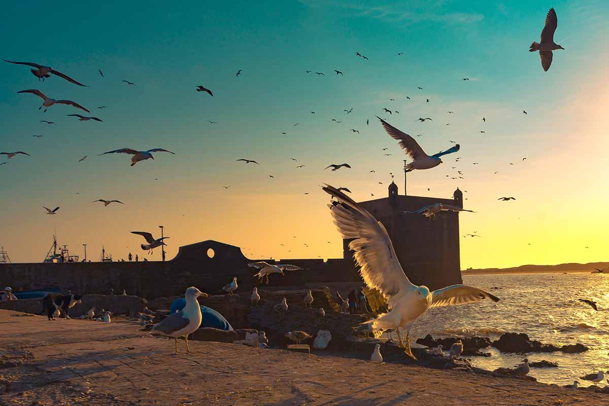 Paisajes de Essaouira