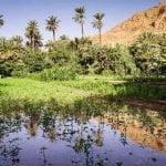 Oasis en Marruecos